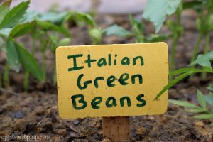 Garden Signs for the Vegetables