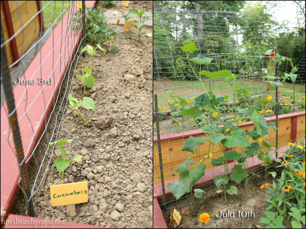 cucumber section 1