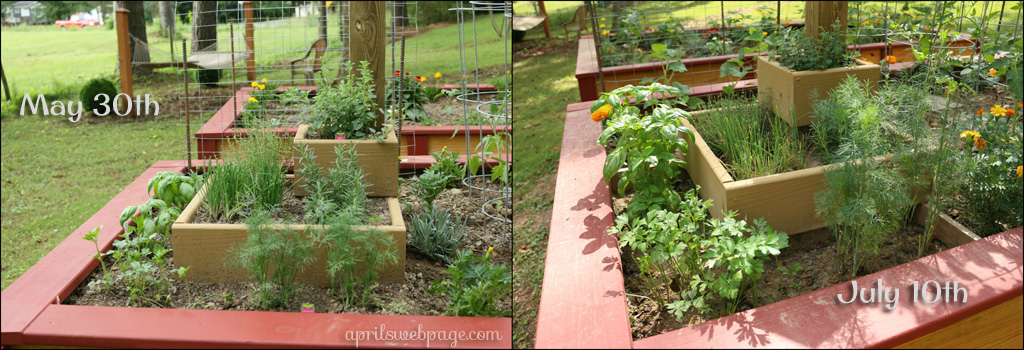 herb garden progress