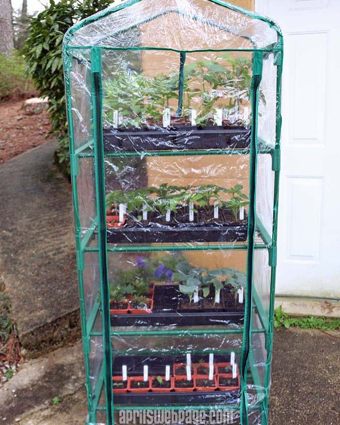 greenhouse from Lowe's