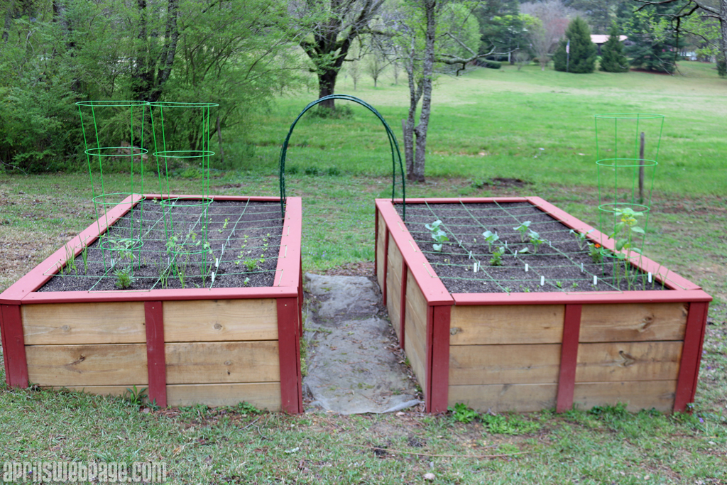 spring garden in raised garden beds