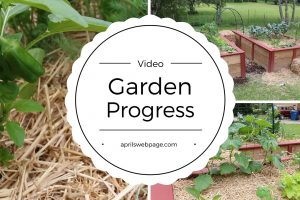 Garden Progress: May 2016