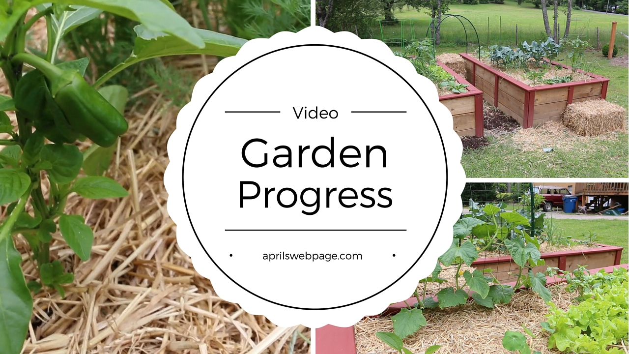 Garden Progress Video